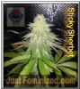 Dank Genetics Sticky Sherbert 7 feminized Seeds